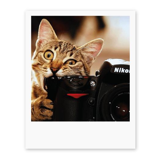 котик ест фотоаппарат